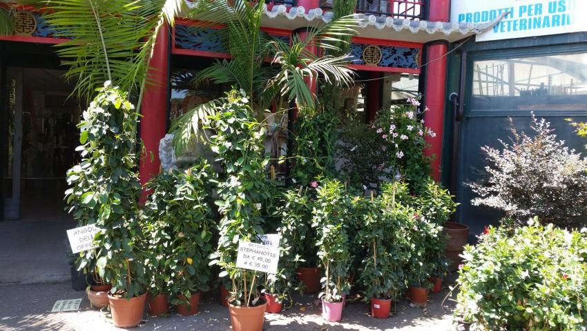 Offerta Piante : Offerta piante da esterno vivaio san placido