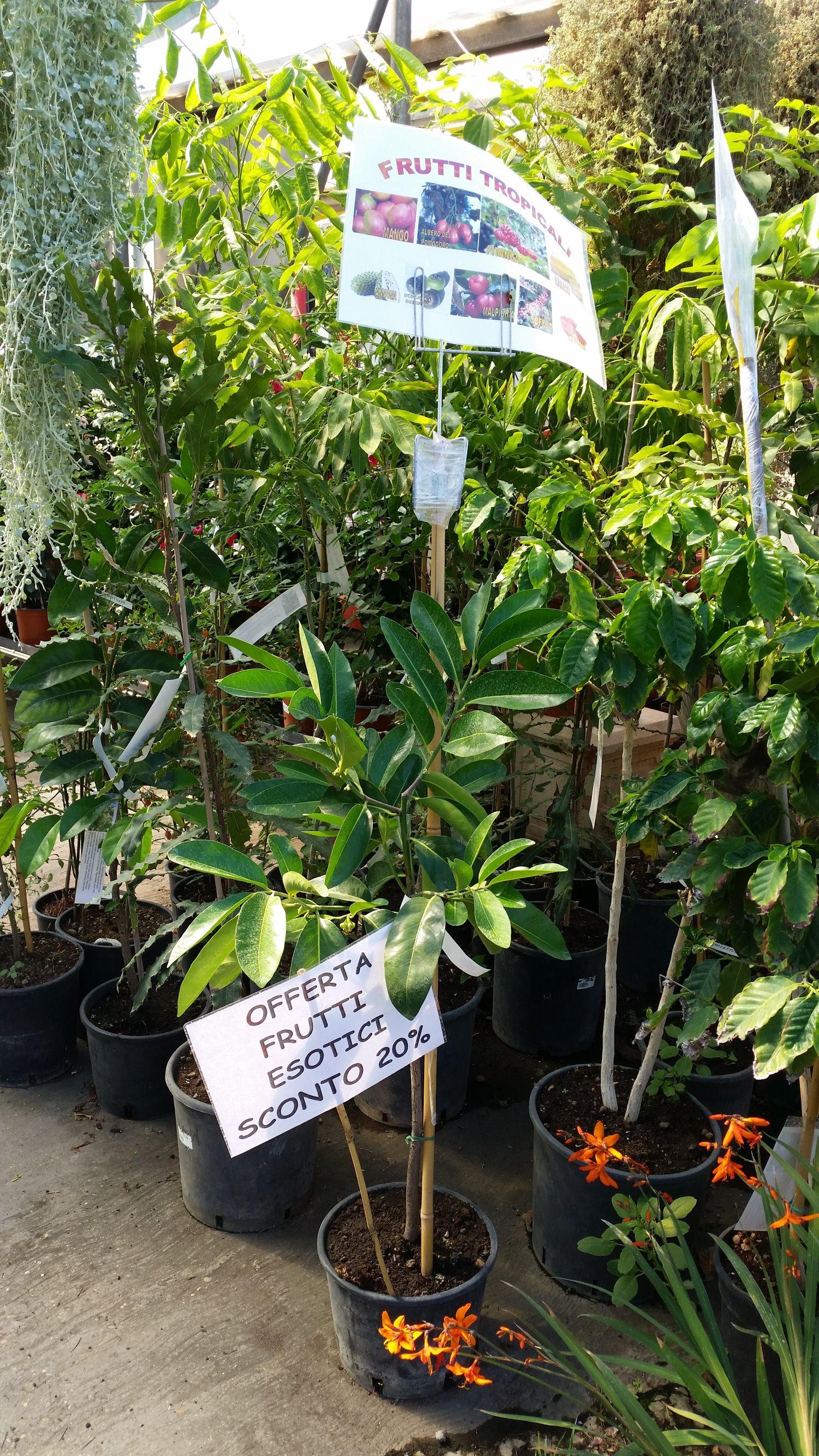 offerta piante da esterno vivaio san placido